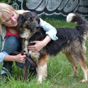 волонтеры в приют для животных 1