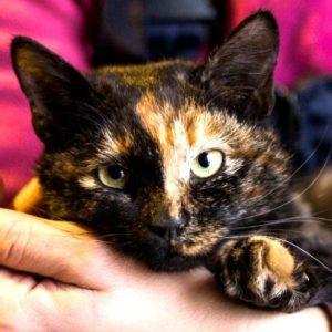 возьмите кошку в дар москва
