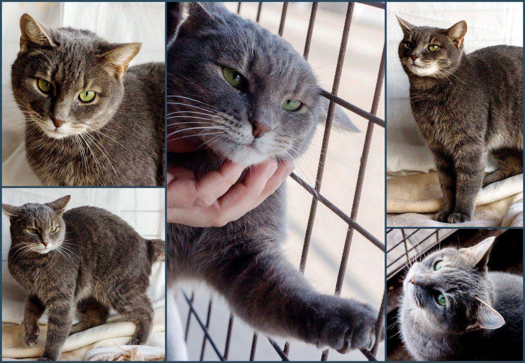 Бирманская кошкаФотографии породы кошек Бирманская кошка