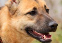 взять щенка из приюта в москве бесплатно