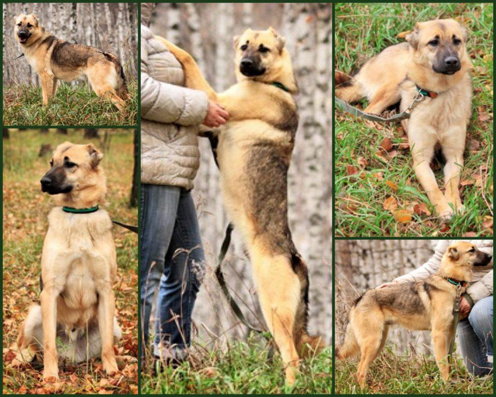 взять щенка из приюта в москве бесплатно 1