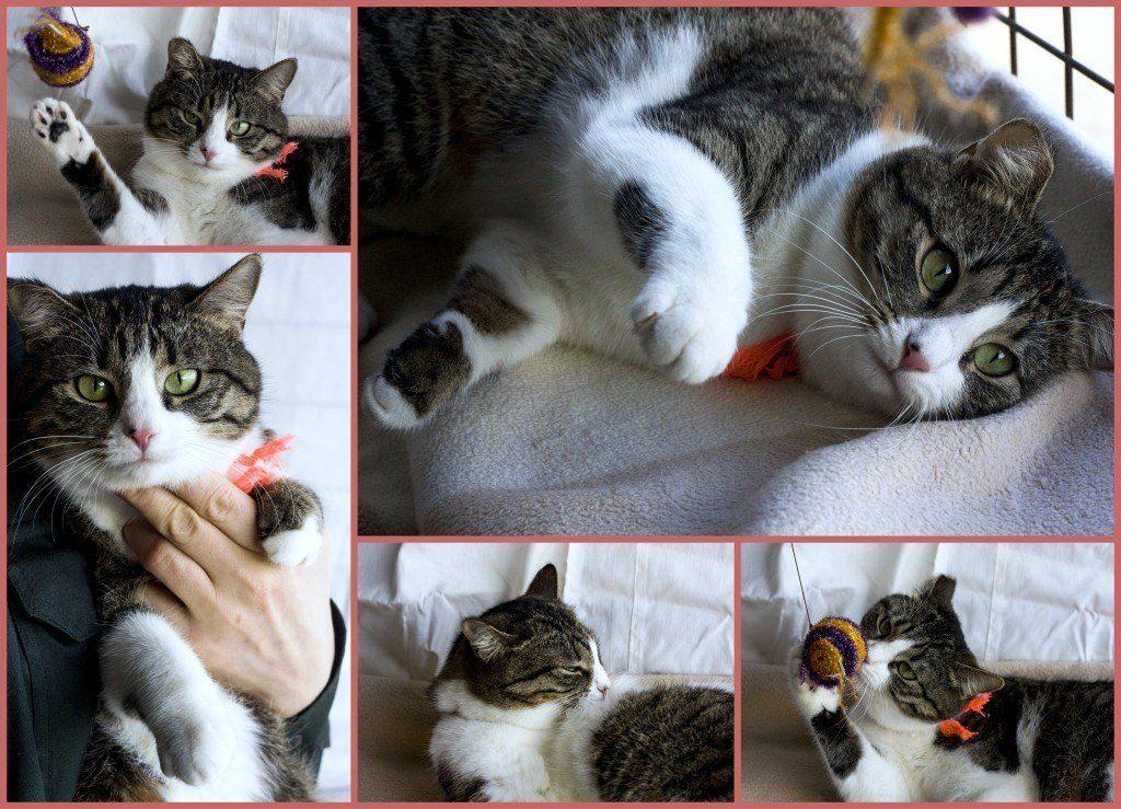 хочу взять кошку 1112