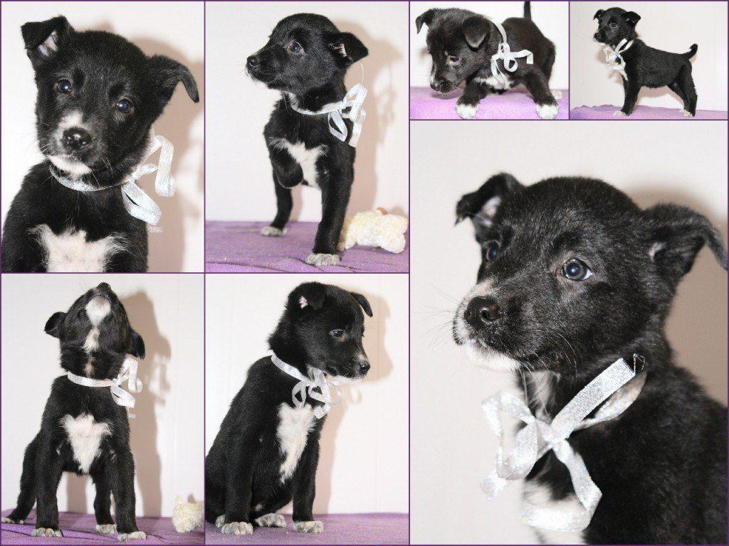 взять щенка из собачьего приюта приюта в москве бесплатно 2