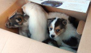 бездомные щенки из приюта