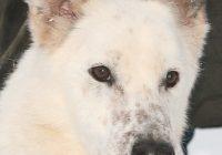 взять собаку из собачьего приюта в москве