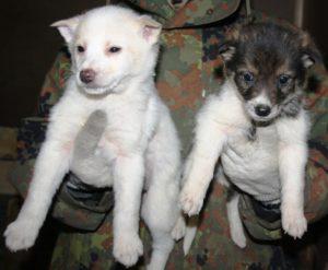 бездомные щенки из приюта 2