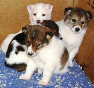 бездомные щенки из приюта 6