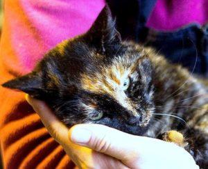 возьмите кошку в дар москва 1