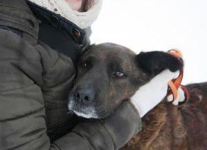 помощь приюту для собак