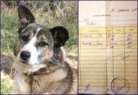 помогите приюту для собак 4