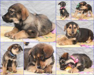 возьмите щенка из приюта в москве бесплатно 5