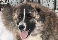 возьмите собаку из приюта в москве бесплатно 5
