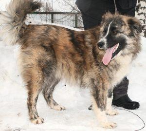 возьмите собаку из приюта в москве бесплатно 2