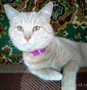 возьмите в дом кошку 2