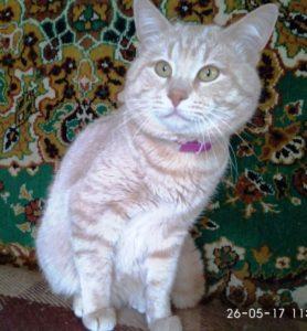 возьмите в дом кошку 5