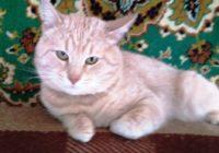 возьмите в дом кошку 6