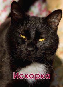 двухцветные кошки Искорка