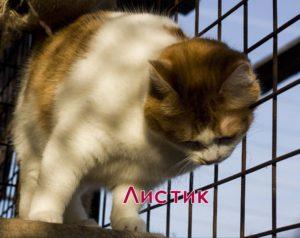 двухцветные кошки Листик