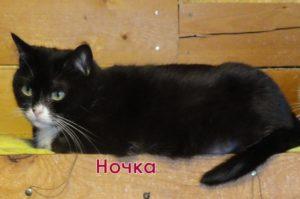 двухцветные кошки Ночка