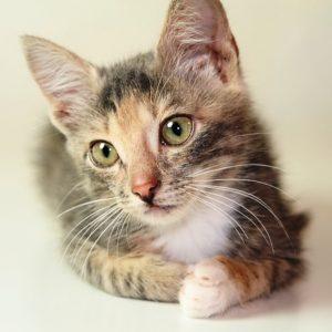 возьмите маленького котенка бесплатно