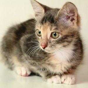 возьмите маленького котенка бесплатно 3