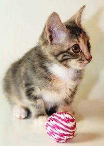 возьмите маленького котенка бесплатно 33