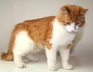 возьмите рыжего котенка бесплатно 11