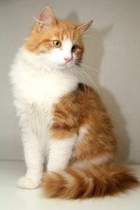 возьмите рыжего котенка бесплатно 5