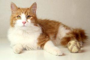 возьмите рыжего котенка бесплатно 3