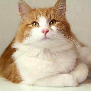 возьмите рыжего котенка бесплатно