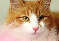 возьмите рыжего котенка бесплатно 22