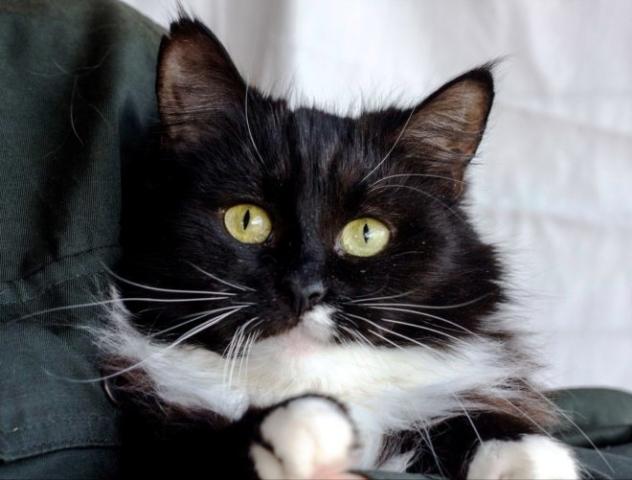 возьмите кошку в добрые руки 23