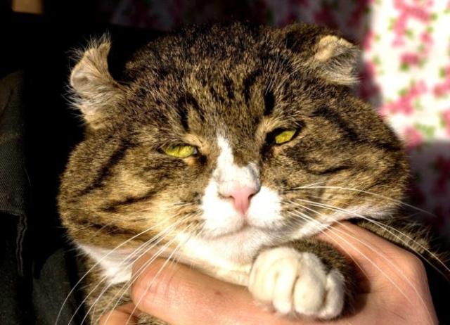 возьмите кошку из приюта в Москве