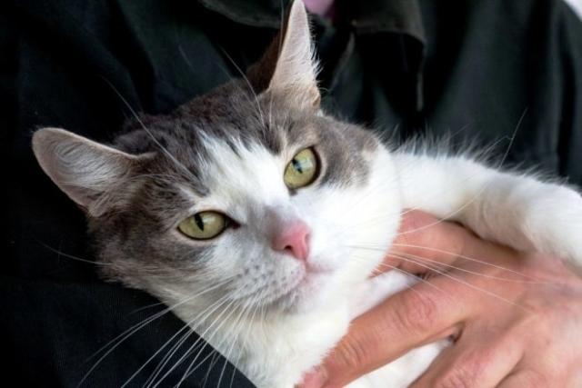 возьмите кошку из приюта в Москве 2