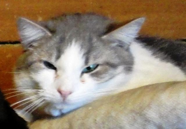 возьмите кошку из приюта в Москве 1