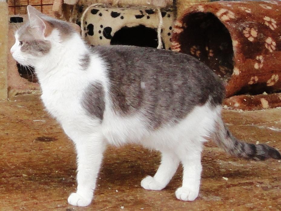 возьмите кошку из приюта в Москве 4