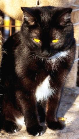 возьмите кошку из приюта в Москве 5