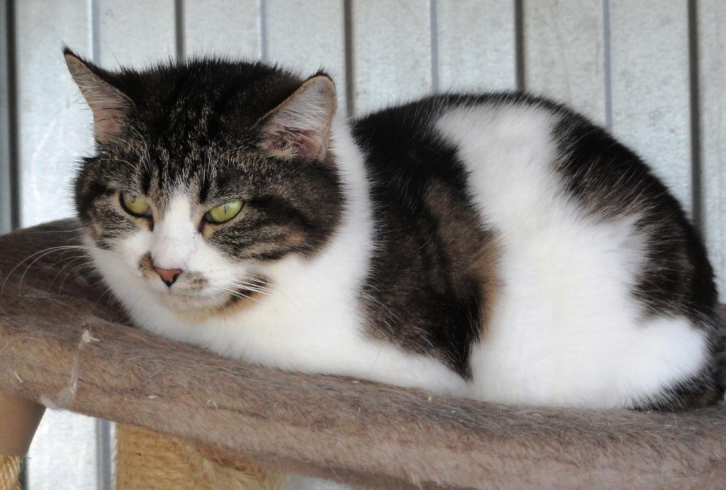 возьмите кошку из приюта в Москве 6