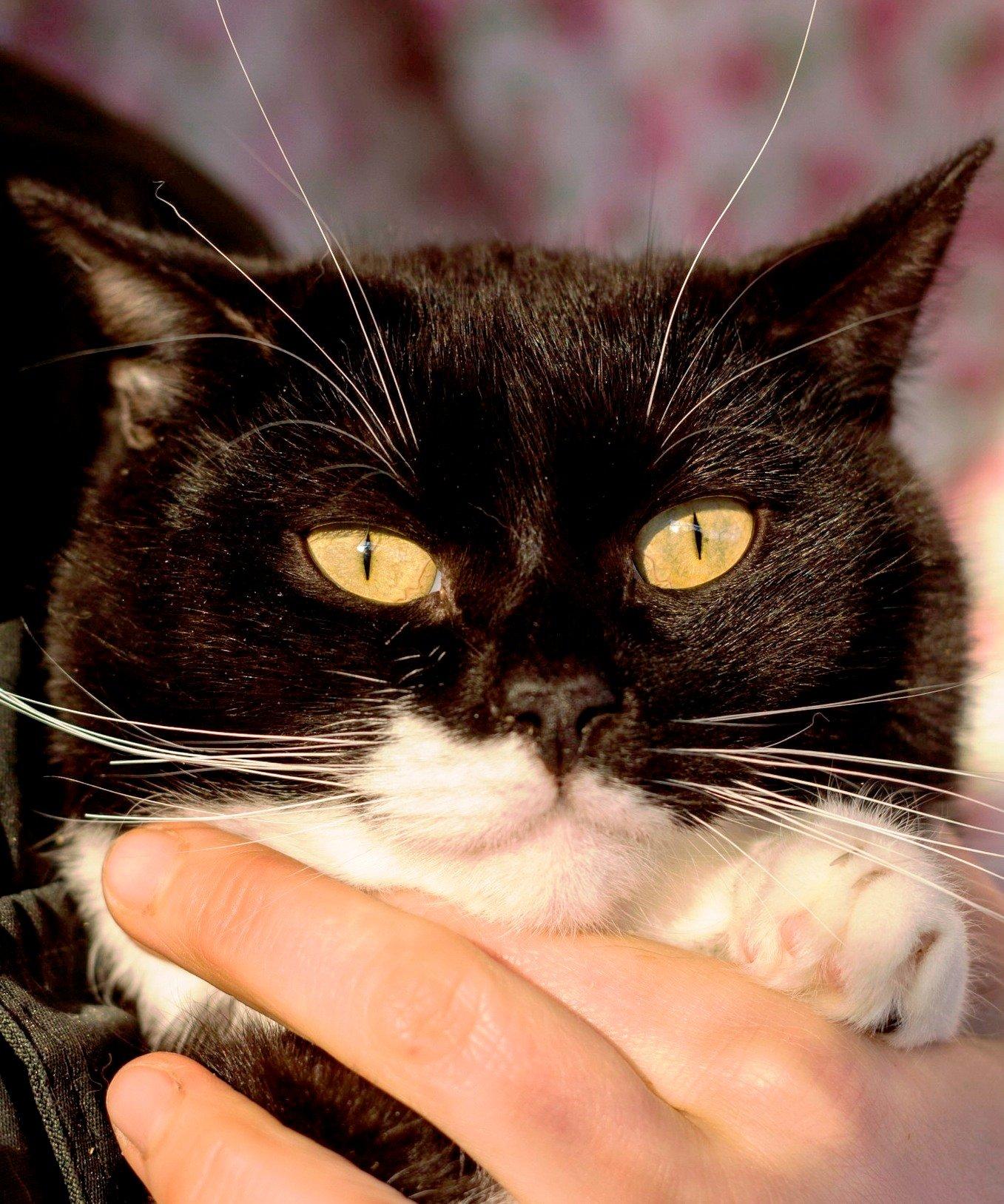 возьмите кошку из приюта в Москве 7