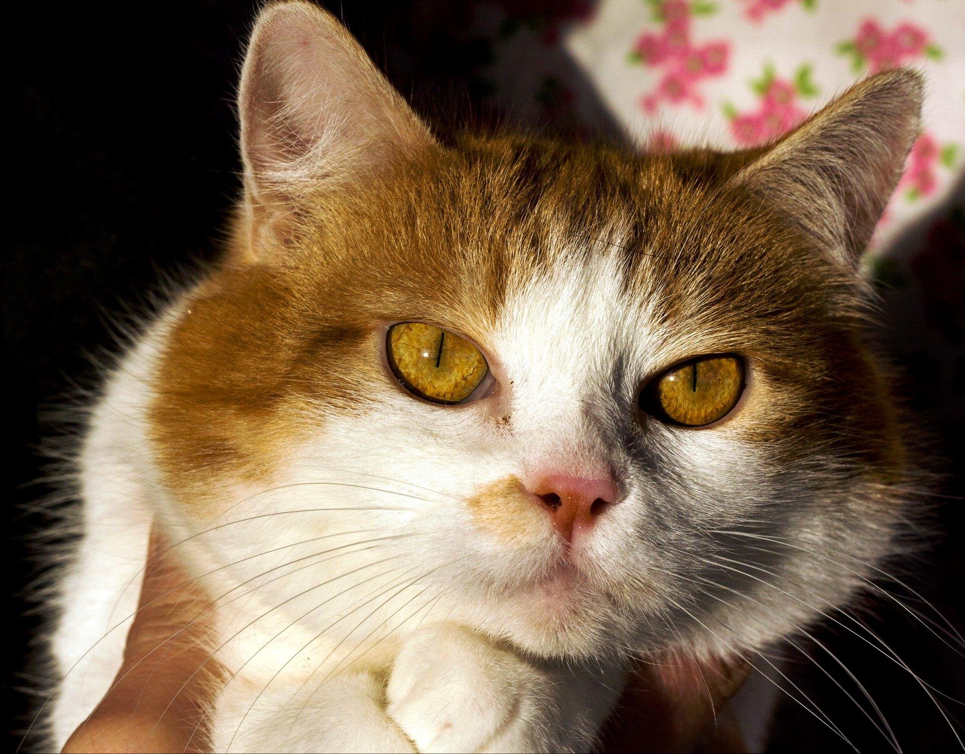 возьмите кошку из приюта в Москве 9