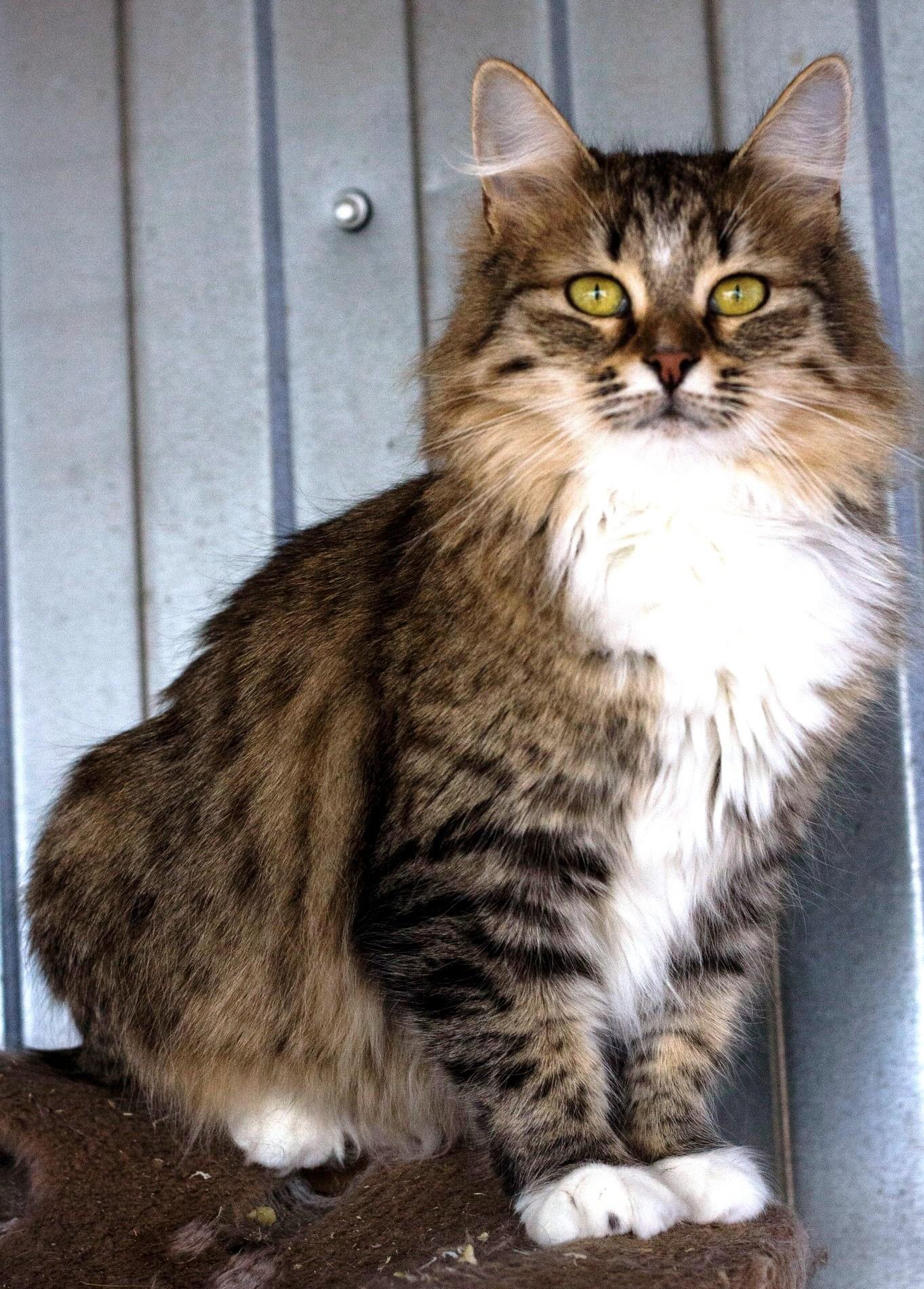 возьмите кошку из приюта в Москве 8