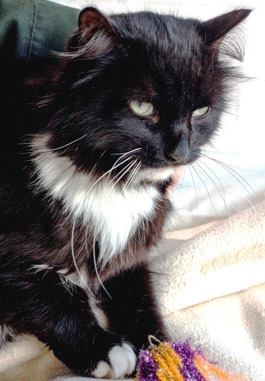 возьмите кошку из приюта в Москве  11