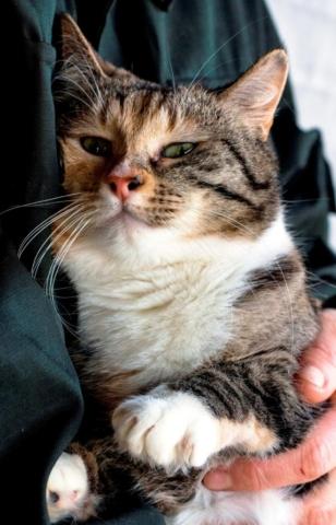 возьмите кошку в добрые руки 3