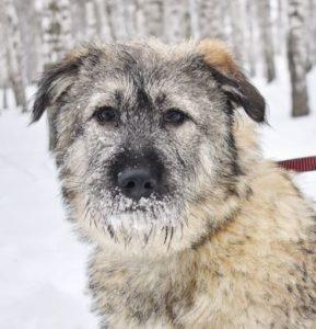 возьмите щенка из приюта в москве бесплатно