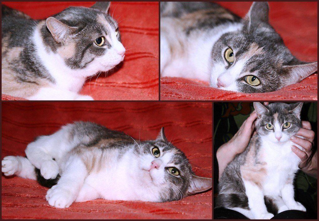 возьмите кошку в добрые руки