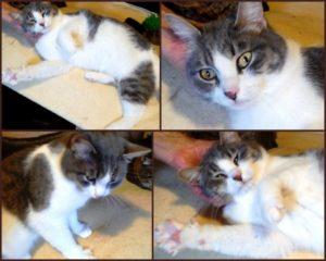 взрослая кошка из приюта в москве