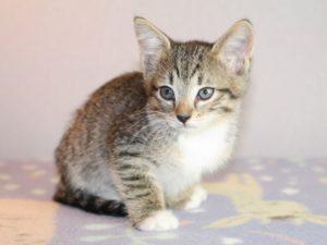 котенок бесплатно в москве