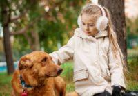 взять добрую собаку в дом 4