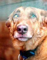 собака из приюта в москве
