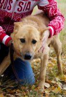 лучшая собака для дома и семьи 8
